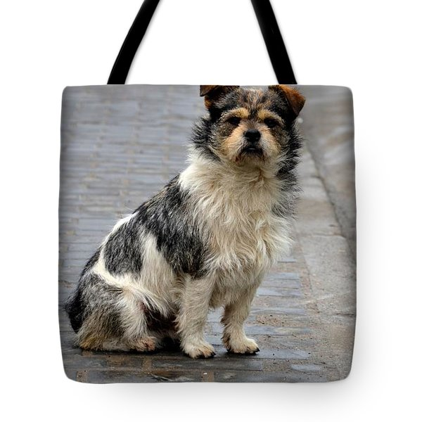 Cute Dog Sits On Pavement And Stares At Camera Tote Bag