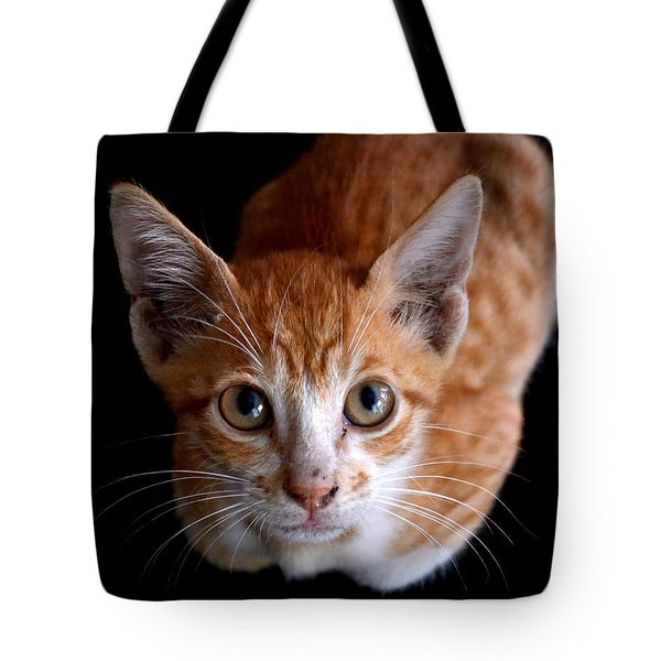 Cute Kitten Tote Bag