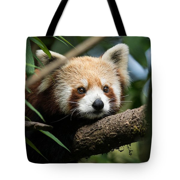 Cute Panda Tote Bag