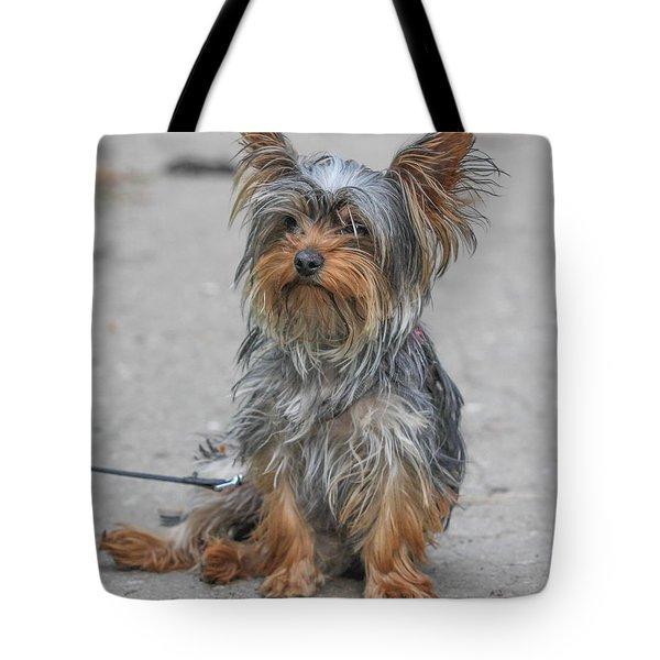 Cute Yorki Tote Bag by Jivko Nakev