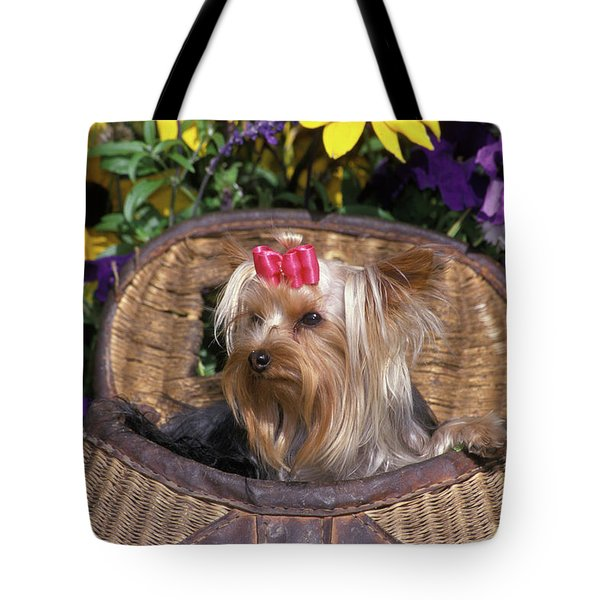 Cute Yorkshire Terrier Dog With Red Tote Bag