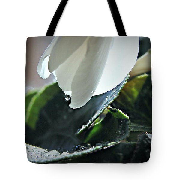 Tote Bag featuring the photograph Cyclamens In The Rain by Katie Wing Vigil