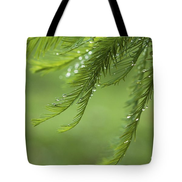 Tote Bag featuring the photograph Cypress In The Mist - Art Print by Jane Eleanor Nicholas