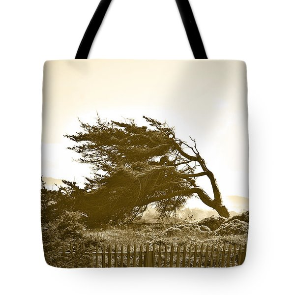 Cypress Trees In Monterey Tote Bag by Artist and Photographer Laura Wrede