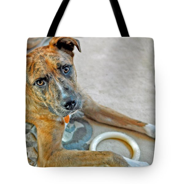 Cyrus Tote Bag by Lisa Phillips
