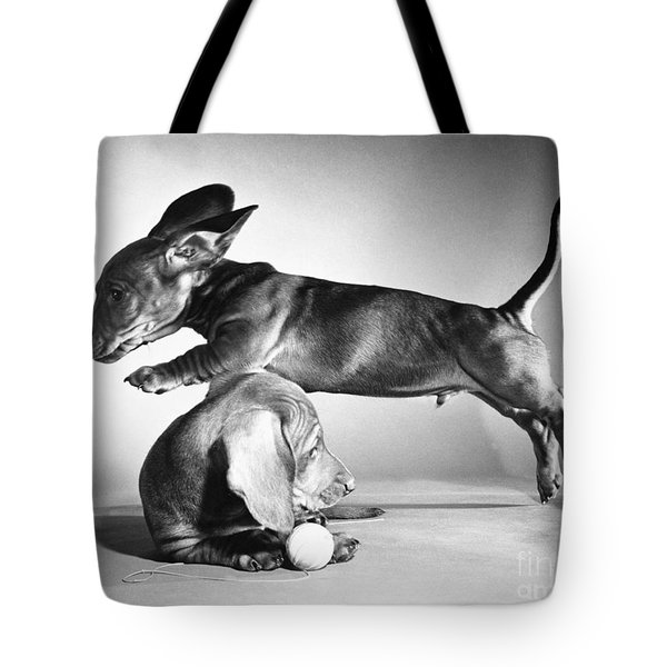 Dachshund Puppies Playing Tote Bag by ME Browning