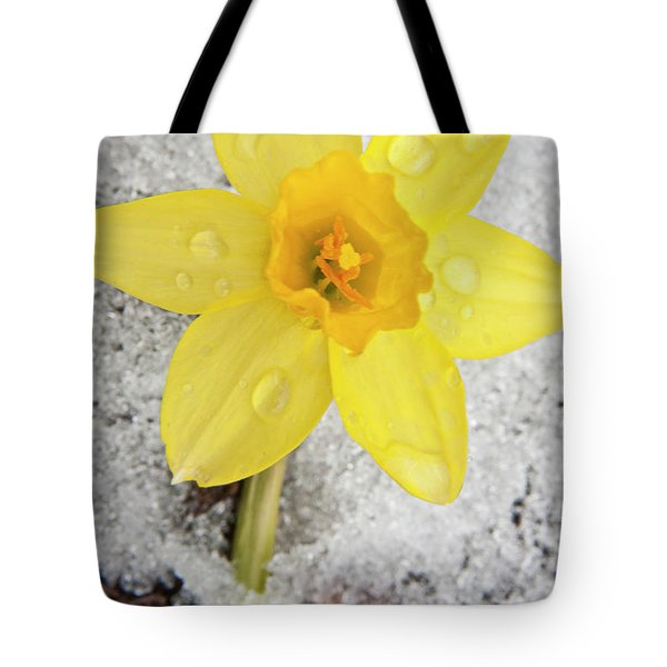 Daffodil In Spring Snow Tote Bag by Adam Romanowicz