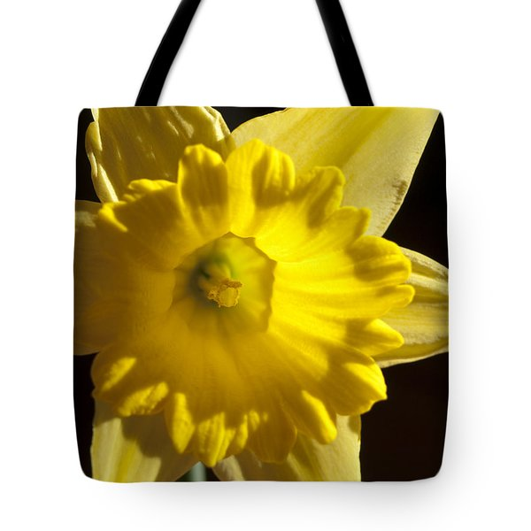 Tote Bag featuring the photograph Daffodile by Haleh Mahbod
