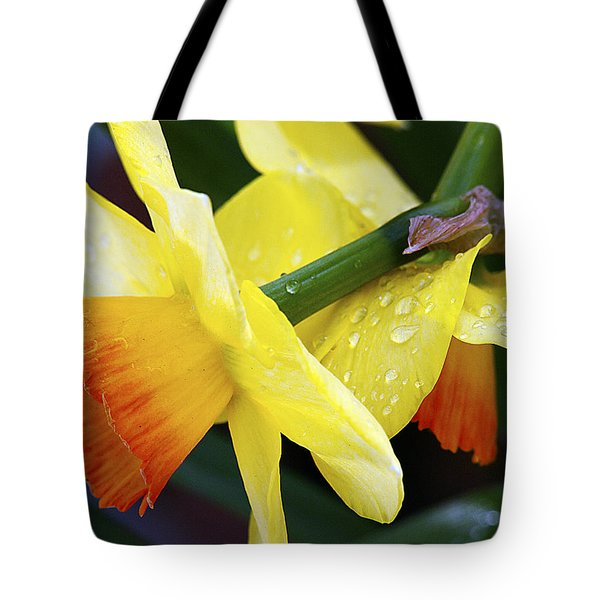 Tote Bag featuring the photograph Daffodils With Rain by Joe Schofield