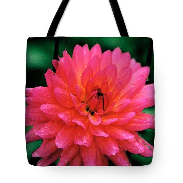 Dahlia #10 With Dew Taos Garden Tote Bag by Robert J Sadler