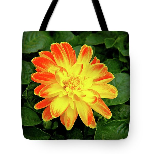 Dahlia Tote Bag by Ed  Riche