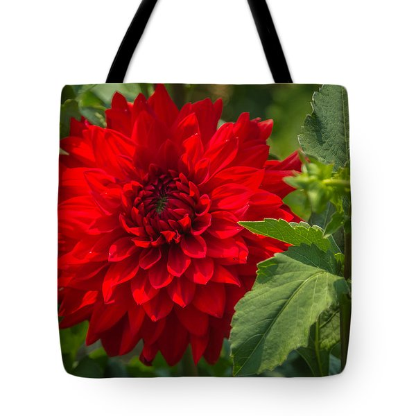 Dahlia Perfection Tote Bag by Jane Luxton