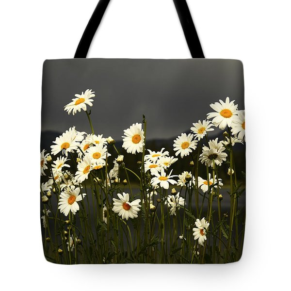 Daisies In Storm Light Tote Bag