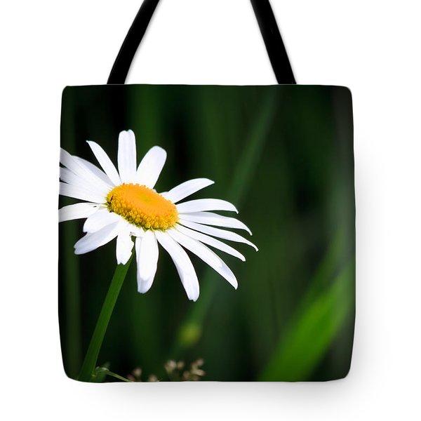 Daisy - Bellis Perennis Tote Bag