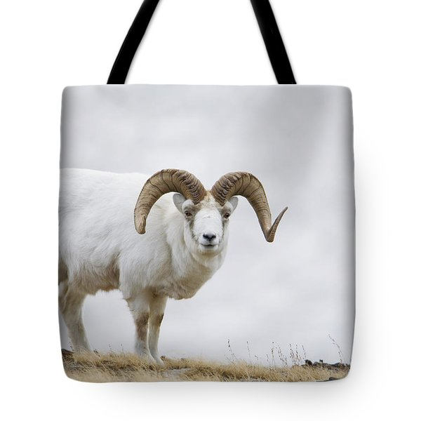 Dall Sheep Ram On Sheep Mountain Tote Bag