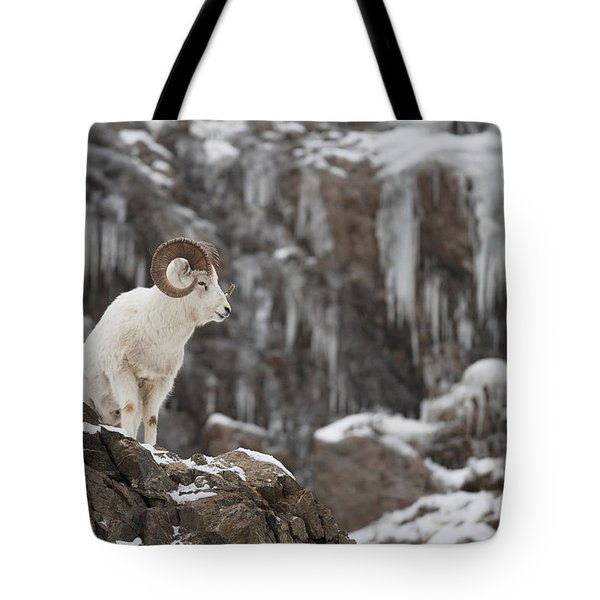 Dall Sheep Ram Stands On A Rocky Cliff Tote Bag
