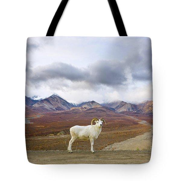 Dalls Sheep Ram Denali National Park Tote Bag