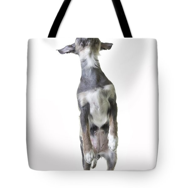 Dancing Dog Tote Bag by Edward Fielding
