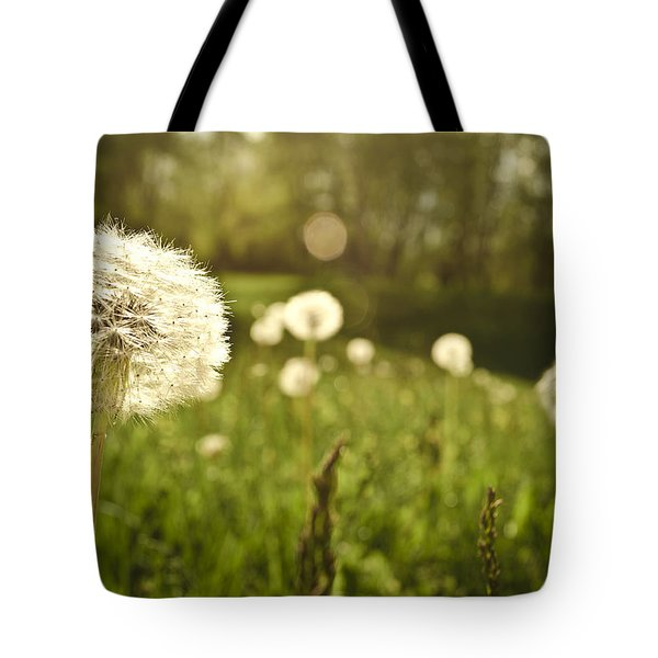 Dandelion Basking In The Sun Tote Bag