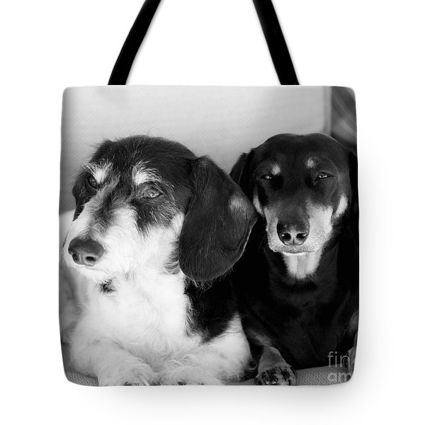 Dapper Doxies Tote Bag by Erika Weber