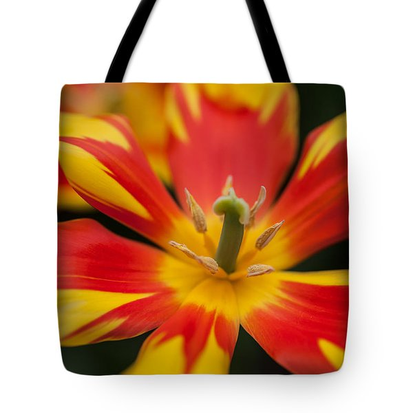 Dappled Tulip 1. The Tulips Of Holland Tote Bag
