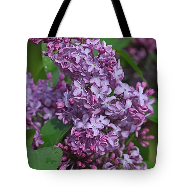 Dawns Lilacs Tote Bag