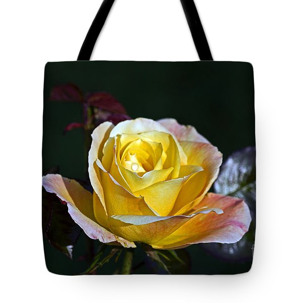 Tote Bag featuring the photograph Day Breaker Rose by Kate Brown