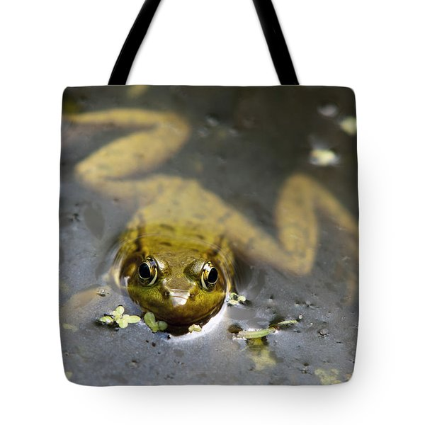 Daybreak Frog Tote Bag by Christina Rollo