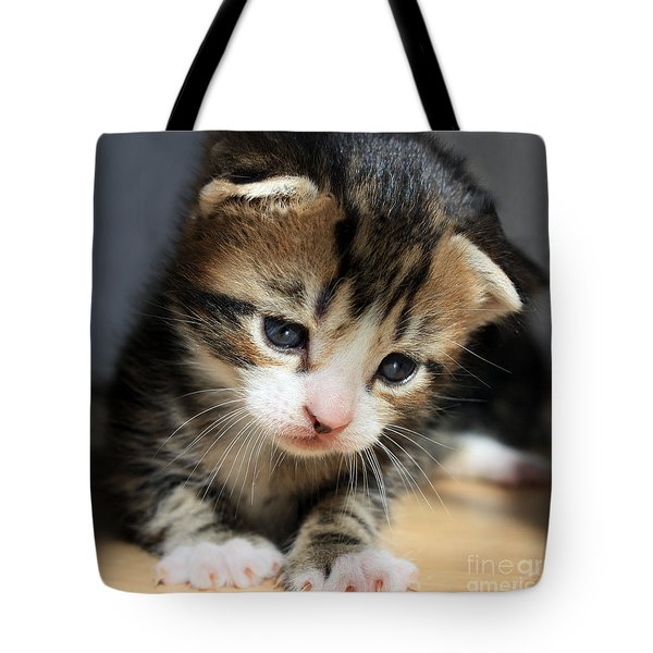 Tote Bag featuring the photograph Daydreamer Kitten by Terri Waters