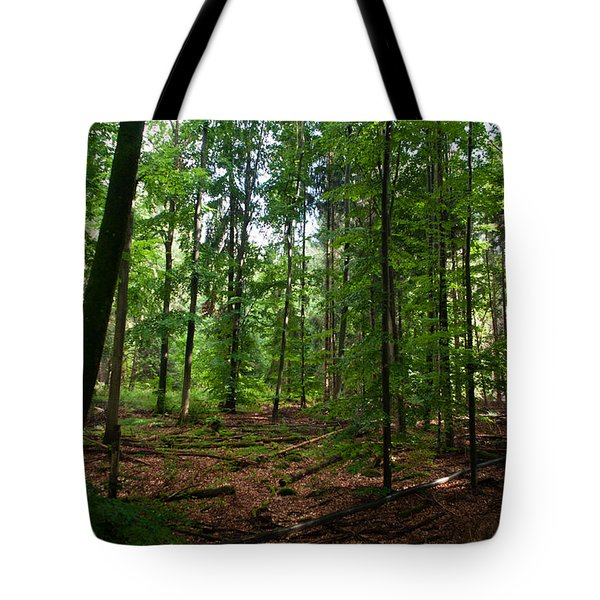 Deep Forest Trails Tote Bag