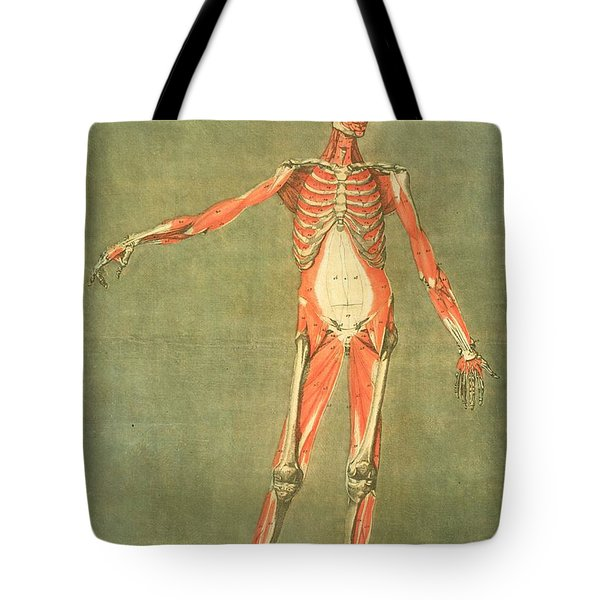 Deeper Muscular System Of The Front Tote Bag by Arnauld Eloi Gautier D'Agoty