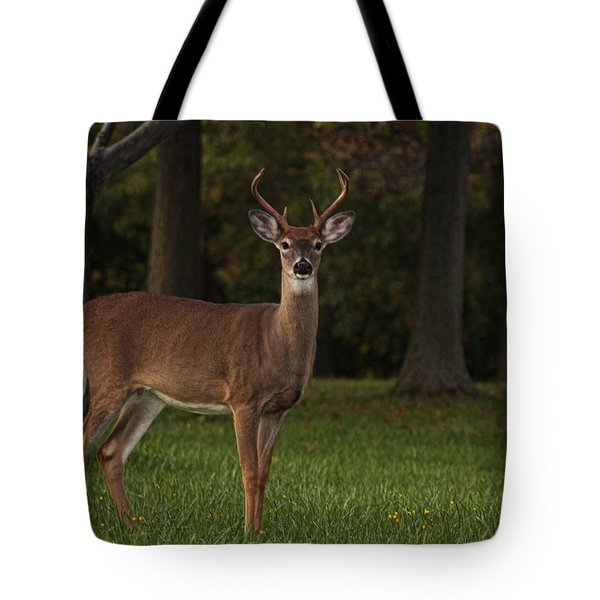 Tote Bag featuring the photograph Deer In Headlight Look by Tammy Espino