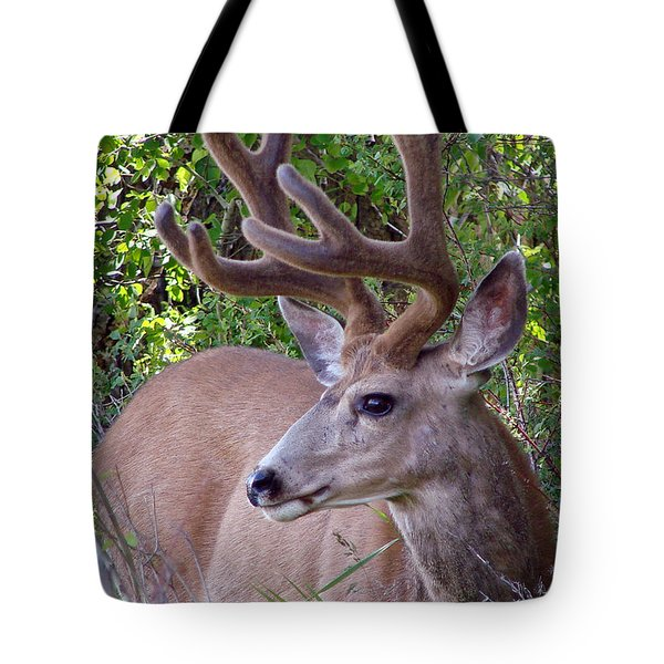 Tote Bag featuring the photograph Buck In The Woods by Athena Mckinzie