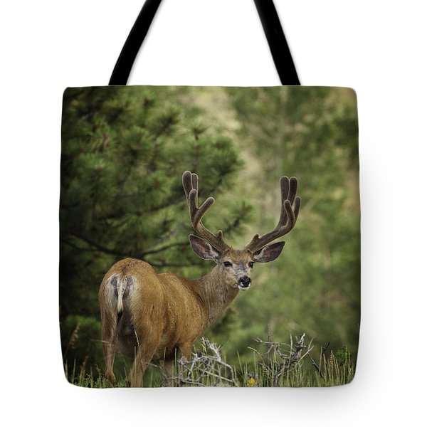 Deer In Velvet Tote Bag