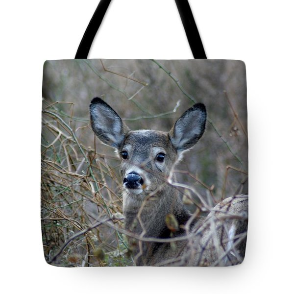 Tote Bag featuring the photograph Deer by Karen Silvestri