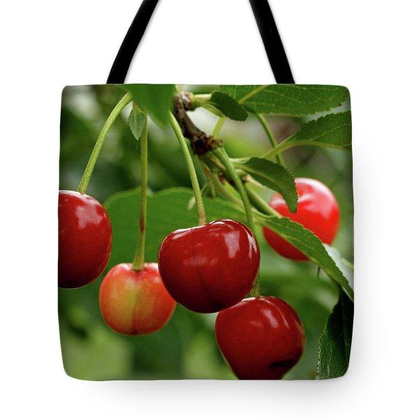 Delicious Cherries Tote Bag by Sandy Keeton