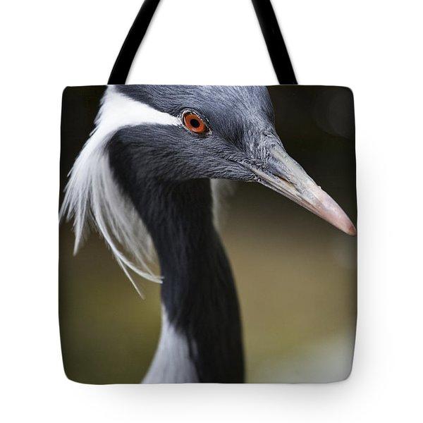 Demoiselle Crane  Tote Bag by Douglas Barnard