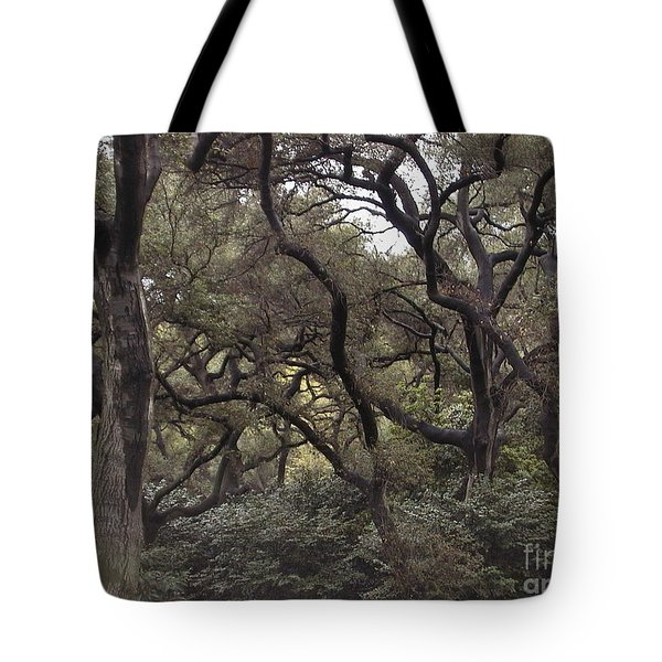 Descanso Oaks 3 Tote Bag