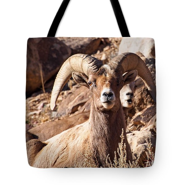 Desert Bighorn Sheep Tote Bag