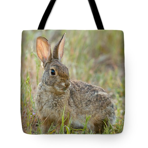 Desert Cottontail Tote Bag by Doug Herr