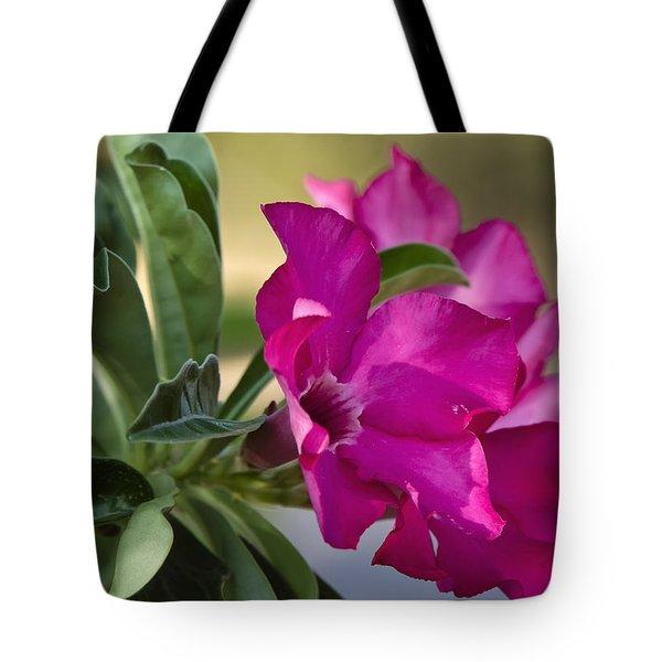 Desert Rose  Tote Bag by Saija  Lehtonen