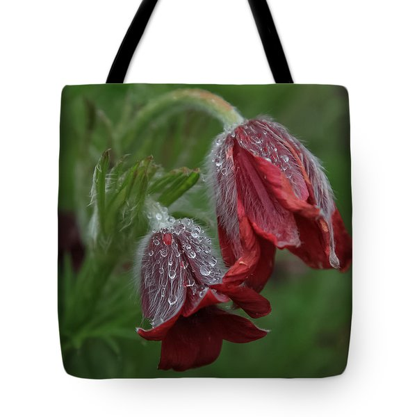 Dew Covered Pasque Flower Tote Bag by Jane Luxton