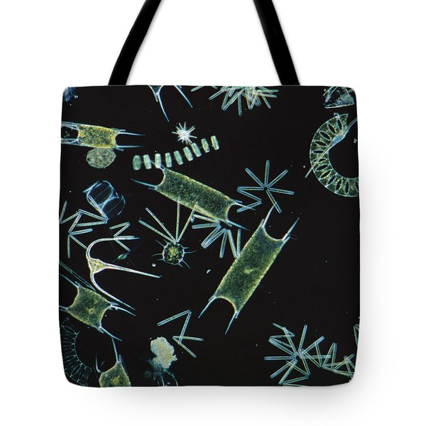 Diatoms And Dinoflagellates Tote Bag by D P Wilson