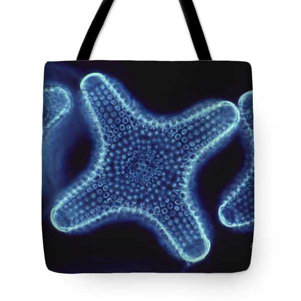 Diatoms Tote Bag by Dr. Cecil H. Fox