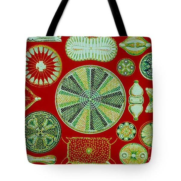 Diatoms-ernst Haeckel Tote Bag by Scott Camazine