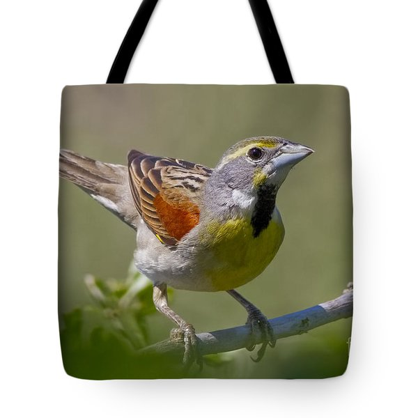 Dickcissel Tote Bag by Gary Holmes