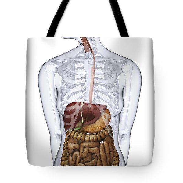 Digestive System, Illustration Tote Bag