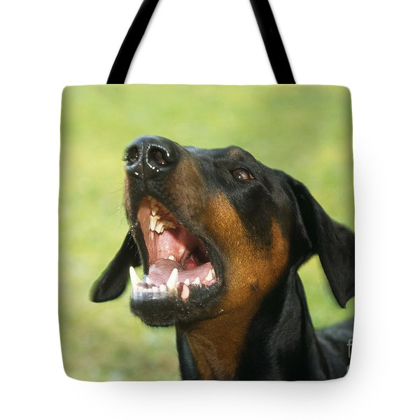 Doberman Pinscher Dog Tote Bag by John Daniels