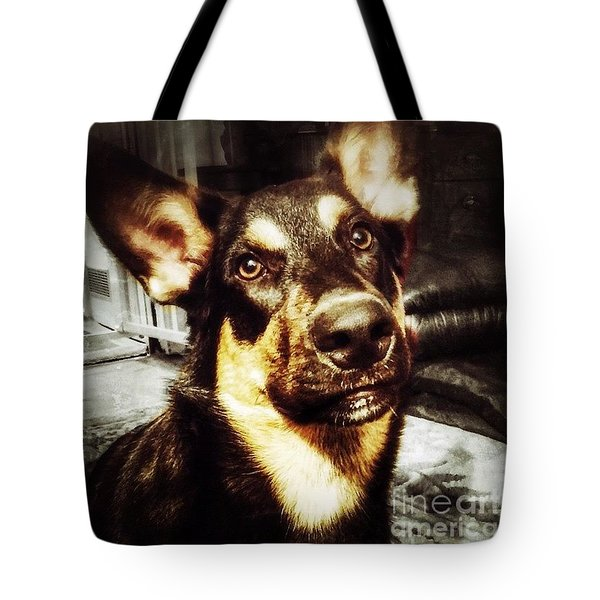 #dog #darcy #dogoftheday Tote Bag