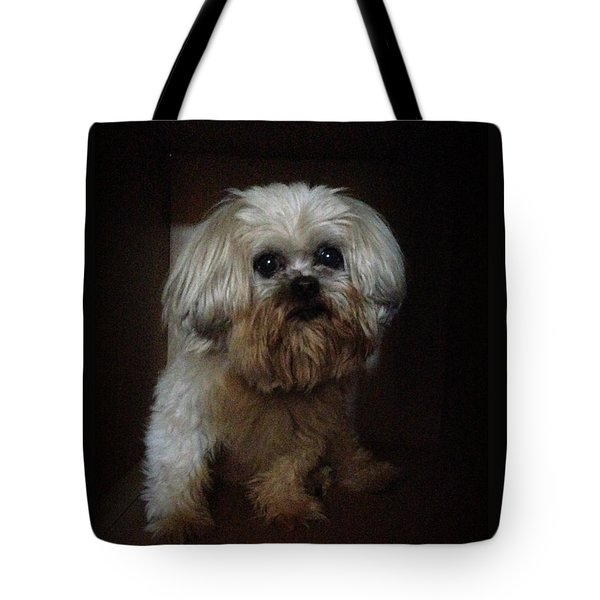 Dog In The Box Tote Bag